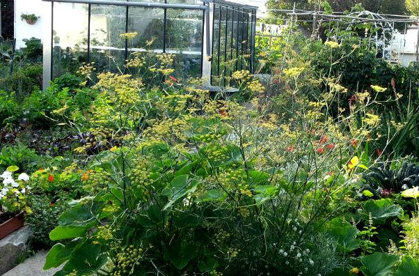 Bronzen Venkel Een Prachtige Plant Insecten Zijn Er Dol Op En De